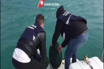 Bari, 3500 ricci sequestrati e rimessi in mare dalla Guardia Costiera
