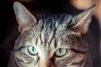Mayor in Abruzzo bans feeding stray cats