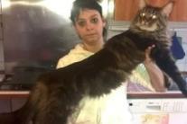 Barivel, world's longest cat, lives in Lombardy