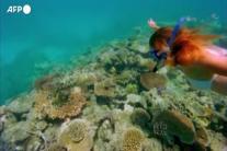 Ambiente, l'Unesco salva la grande barriera corallina australiana