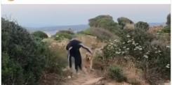 Gianni Morandi «In ginocchio da te»: brutta caduta mentre fa jogging col cane