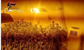 In casa ha una serra di marijuana: un arresto nel Brindisino
