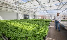 Agricoltura: Ifoam, regolamentare nuovo biotech Ue come ogm
