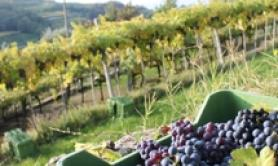 US West Coast wine drinkers conscious of sustainability