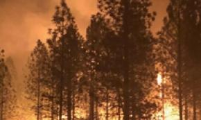 California: 79 i morti per i roghi