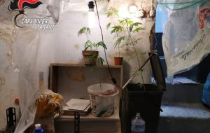Mottola, carabinieri scoprono serra con piante di cannabis: un arresto