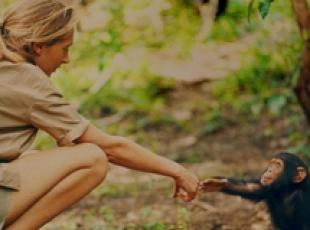 Vita di Jane Goodall con scimpanzè in tv