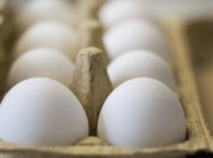 2 cases of contaminated eggs in Campania (2)