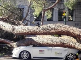 Tree falls onto moving cars in Rome (2)